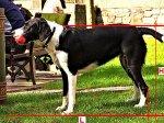 Zwierzak w domu: co jest konieczne, by pupil był zdrowy i silny?