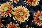 Chcesz zakupić najlepsze kwiaty? Idealnym wyborem stanie  się hodowla w Praszce