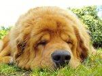 W jaki sposób ochronić psa przed eskapadami, a ogród przed uszkodzeniem