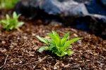 Rozmaite sadzonki krzewów doskonałe do oryginalnej aranżacji ogrodu