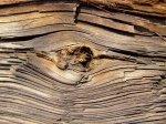 W twoim domu jest dużo elementów z drewna? Musisz zakupić preparaty zwalczające szkodniki, które je niszczą