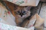 Dbajmy o fundamentalne potrzeby kotków by rozwijały się wspaniale oraz były radosne