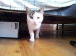O czym muszą pamiętać opiekunowie kotków? Gadżety zapewniające pupilkom przyjemną zabawę i świetne samopoczucie