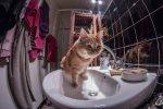 Kuwety oraz karmy dla kota – rzeczy, o których trzeba pamiętać chcąc mieć w własnym mieszkaniu kota.