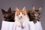 Jeżeli jesteś pasjonatem zwierzaków udomowionych, uwielbiasz koty i podobne stworzenia i chcesz jak najlepiej zatroszczyć się o ich spokojną egzystencję – warto zaznajomić się z obszerną ofertą sklepów zoologicznych.