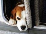 Witaminy dla psa zawierają wszystko co konieczne dla  dobrej kondycji twojego pupila