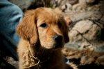 Psy rasowe zwykle są bardzo kosztowną inwestycją